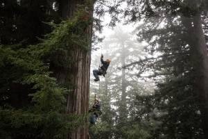 Redwood Canopy