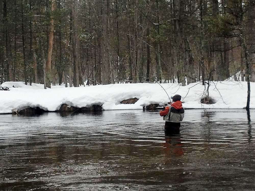 from the field steelhead fishing in michigan