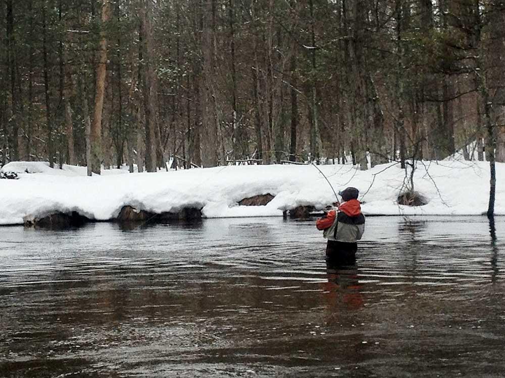 from the field steelhead fishing in michigan