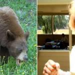 man-punches-bear