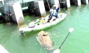 Goliath Grouper Kayak
