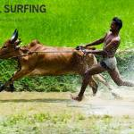 Rare Earth Bull Surfing