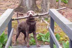 dog has problem