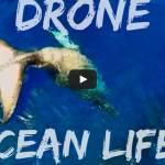 drone ocean life