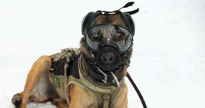 Shades Dog Training