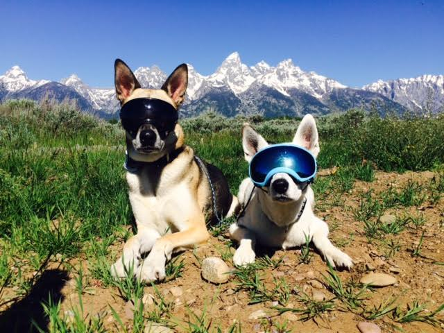 Doggie Sunglasses Goggles  rex specs sunglasses for dogs unofficial networks