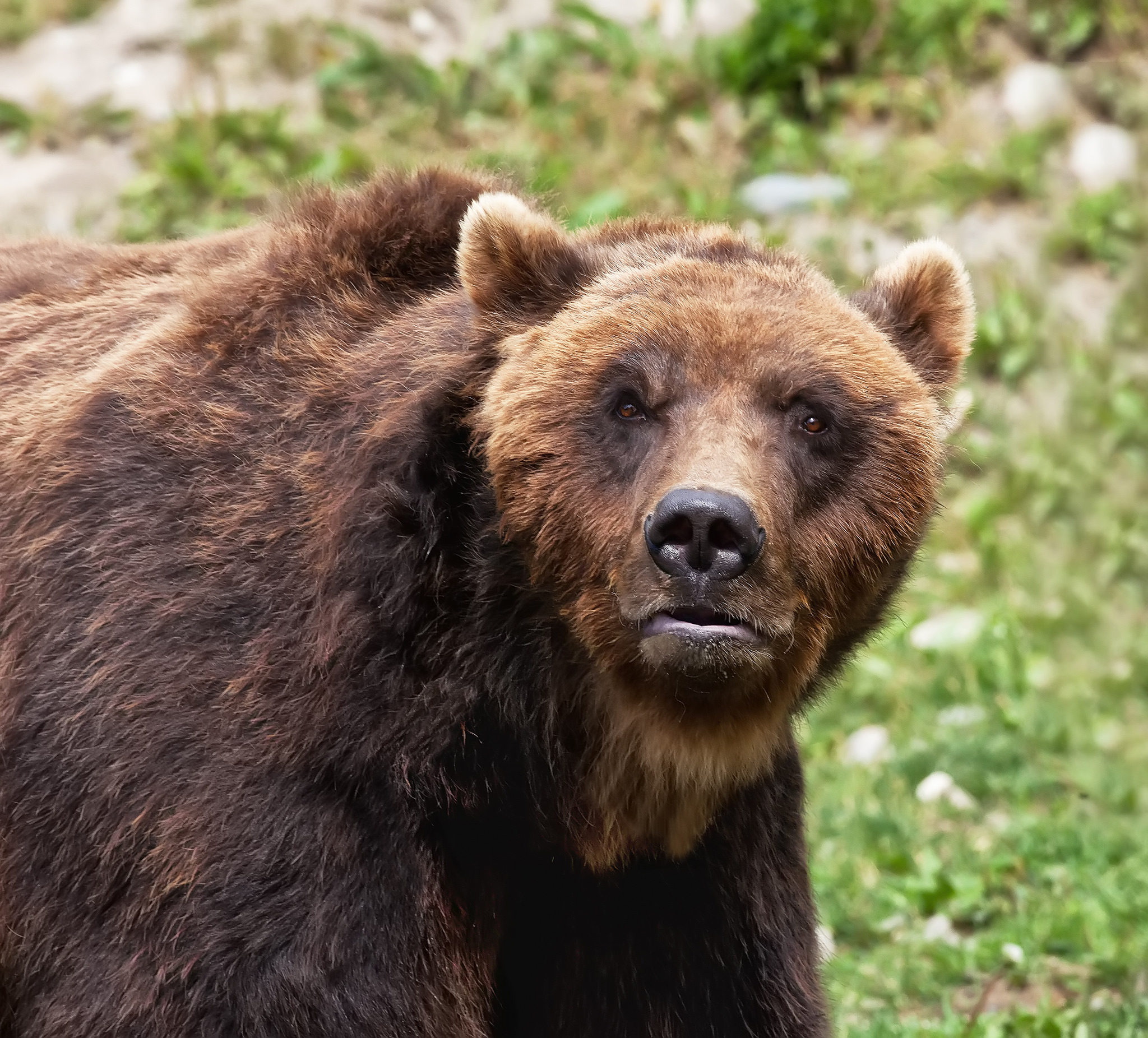 Bears: Tips From A Controversial Expert - photo#6
