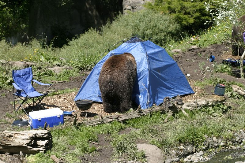 bear in tent 2 & 50 Mistakes: Campers Offer Their Best Advice