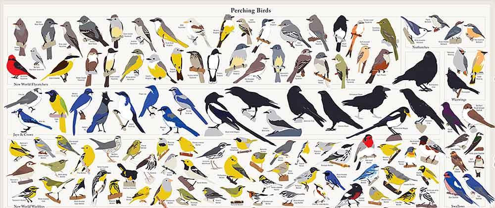 North America Poster On Popchartlab Birds