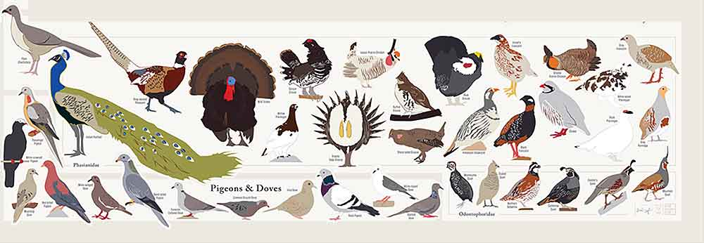 New Sparrows jays owls grouse and hundreds more u look at this piece if you love birds or just want a neat work of natural art for your home or office wall
