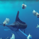 marlin encounter